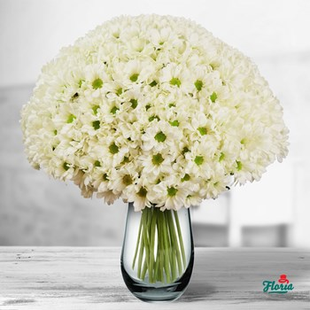 Buchet de 45 crizanteme albe
