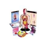 Miniland Kit educational mulaj Corpul uman si sistemul digestiv