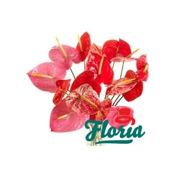 Buchet de 15 anthurium roz