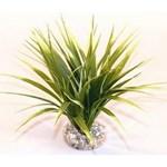 Plante Sydeco Oasis - 20cm 349665