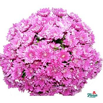 Buchet de 25 crizanteme roz