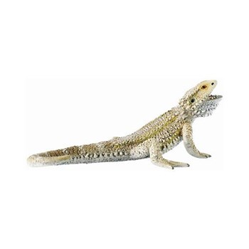 Dragon cu barba bl4007176684962